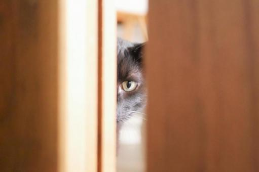 A cat peeking through a gap in the door
