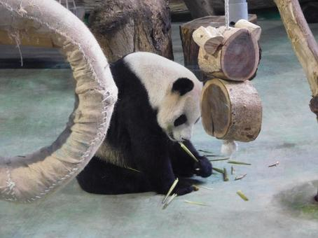 사사를 먹는 팬더