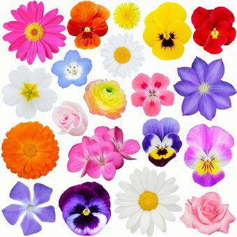 Early summer flower set * See below for cutout pass