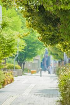 Fresh green tree-lined avenue