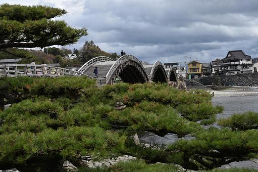 긴 타이 쿄와 소나무