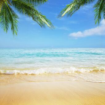 A landscape where waves hit the beach with palm trees