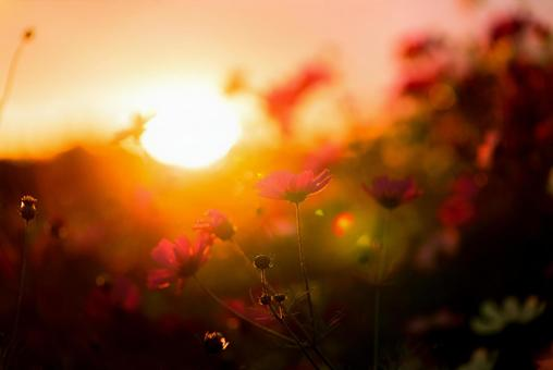 Sunset and Cosmos