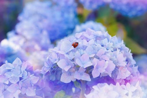 Hydrangea and ladybugs