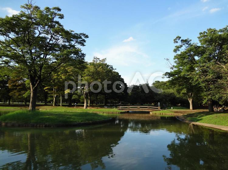 代々木公園10の写真