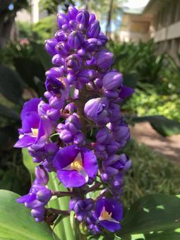 紫の花09