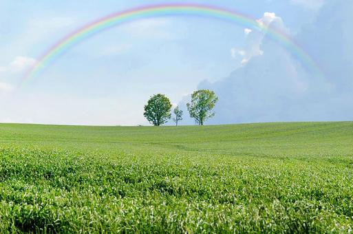 Rainbow, sky and tree of parent and child