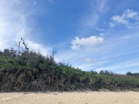 Grass on the coast of Amami Oshima