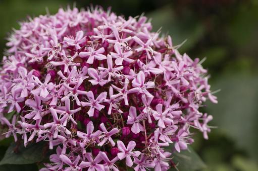발레의 꽃
