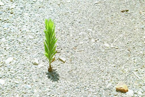 Summer grass of dry ground # 2