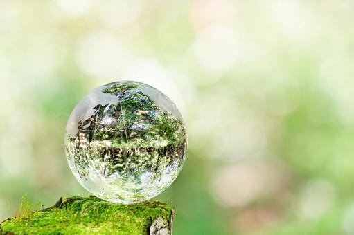 Moss and glass globe