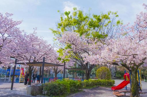 Cherry blossom viewing park