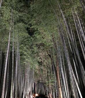 Fantastic bamboo grove