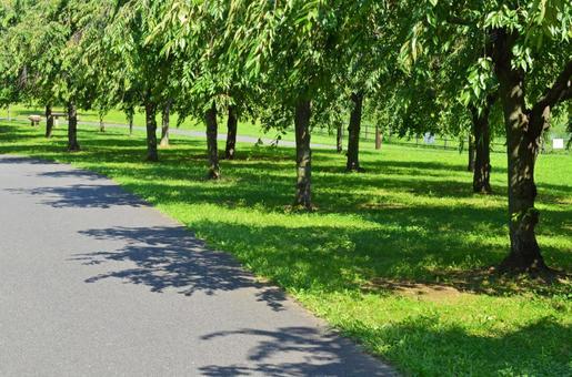 """Image of summer Cherry tree shade and lawn park At """"Ogunohara Park"""" in Arakawa Ward"""