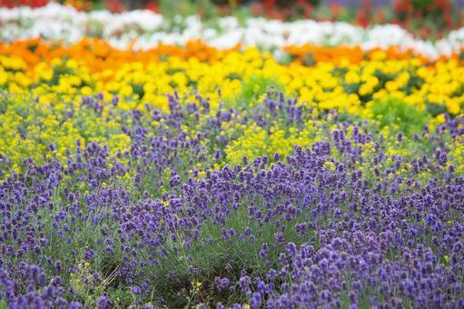 Flower field in Biei, Hokkaido
