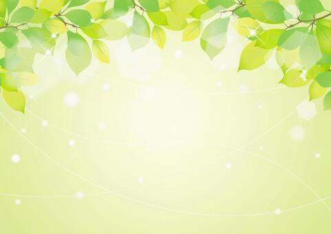 Fresh green image 5