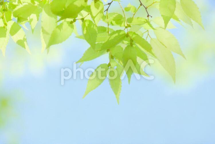 爽やかなグリーンの写真