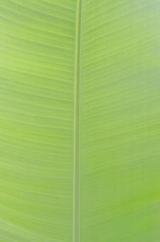 바나나 잎 1