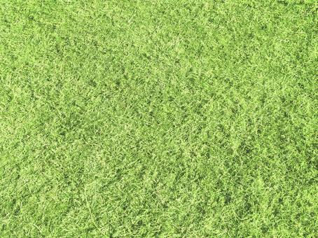 Grass 09 ¥