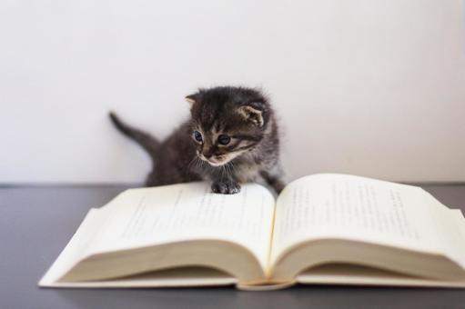Kitten to read
