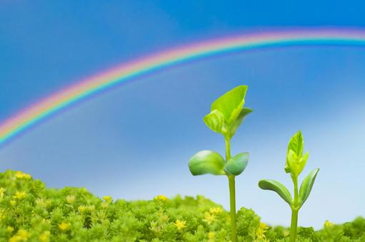 Soybean sprouts, rainbow and blue sky