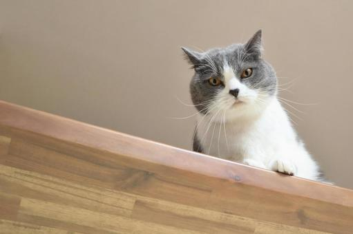위에서 들여다 큰 하찌와레 고양이