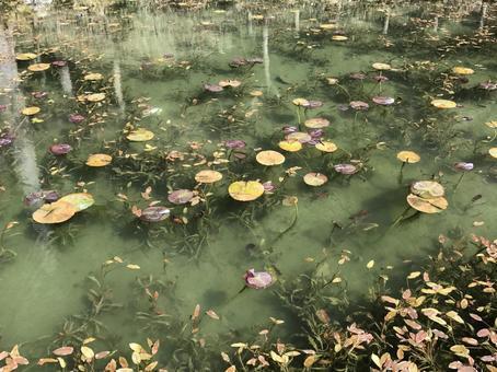 이름없는 연못