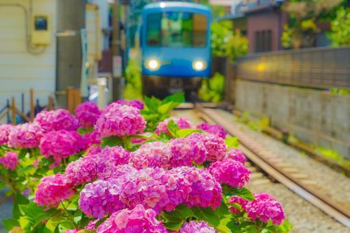 수국과 에노시마 전철