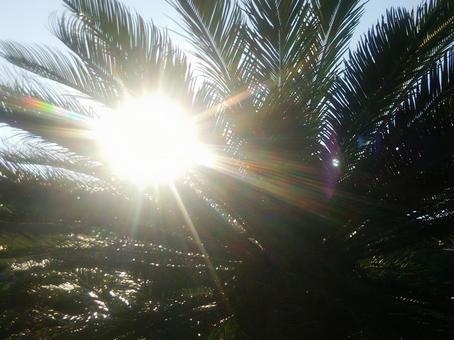 눈부신 햇살