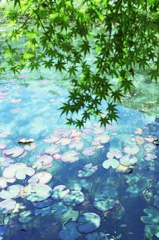 기후현 이타 도리 모네의 연못 14