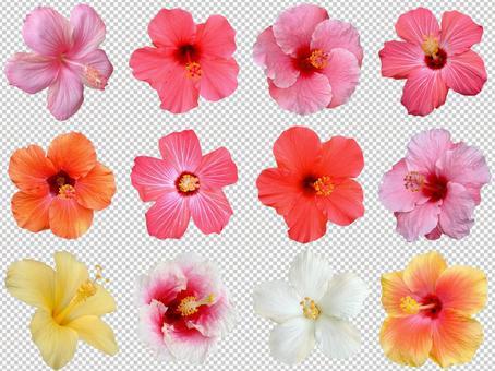 Hibiscus 12-piece set Cutout material