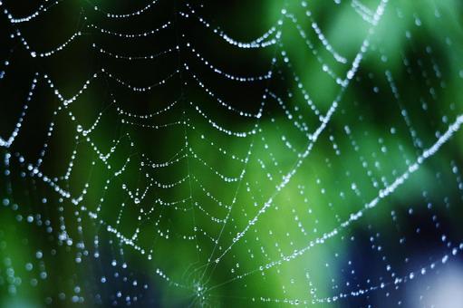 Drop of spider web
