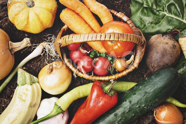 野菜たち24の写真