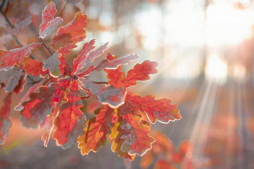 Autumn leaves leaves 2