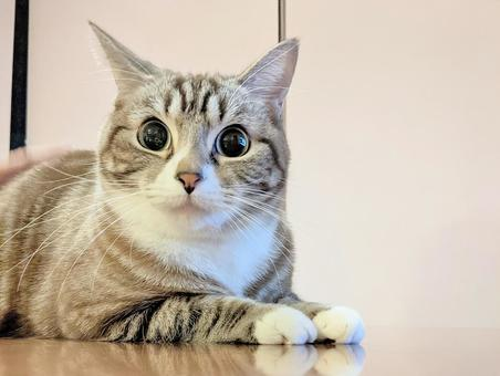 Tabby cat wallpaper with cute big eyes