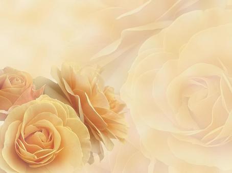 黃玫瑰背景素材