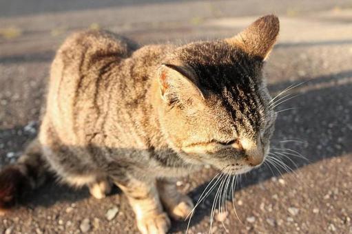 Beardful cat cat