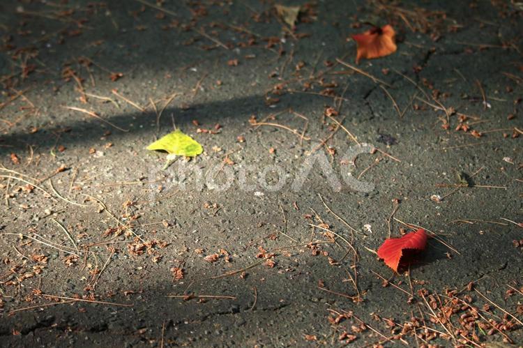 落ち葉 紅葉 背景の写真