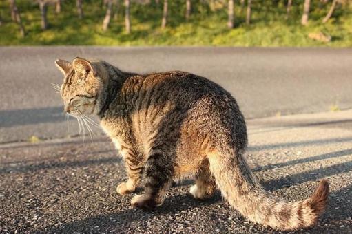 Cat behind the cat