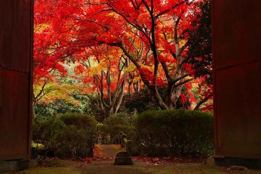 Autumn scenery autumn leaves