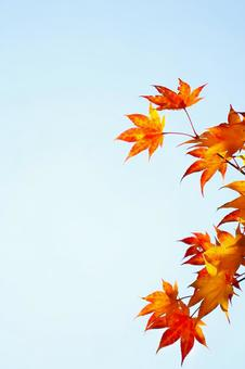 Autumn leaves and autumn blue sky vertical composition