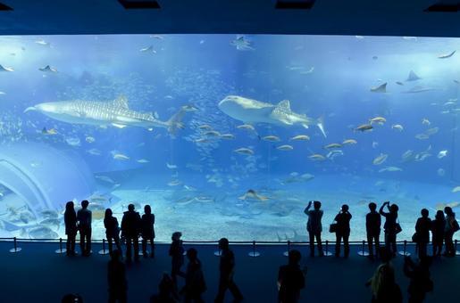 At Churaumi Aquarium 35