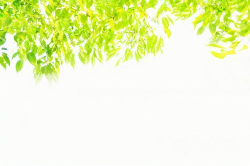 新光_鮮綠色