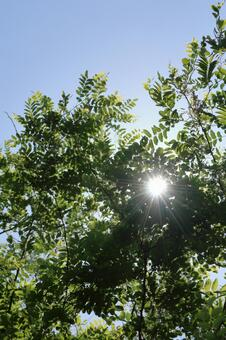Look up at the dazzling sunlight through the sun