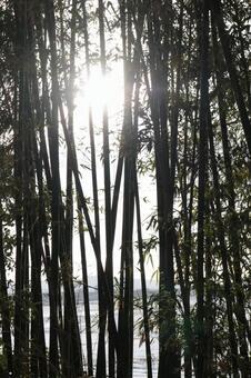 Bamboo yabu