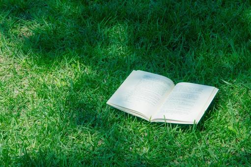 Reading under sunbeam leaves