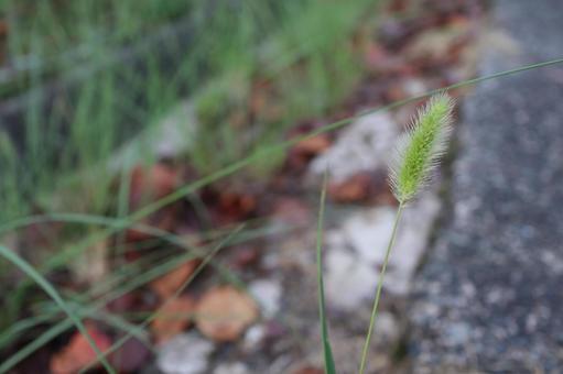 Scenery of Kohoka Nature Park September 2021 (46)