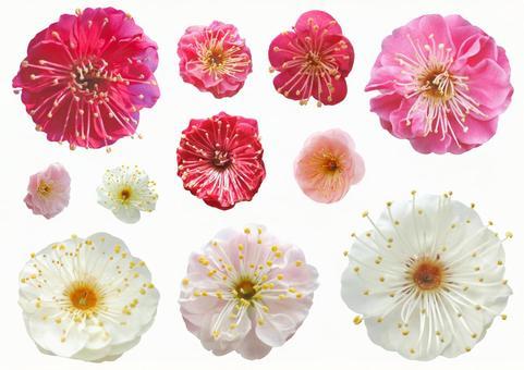 Cut out material Plum flower set