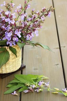 Sage and Sage flowers