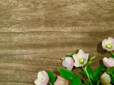 Christmas rose wood grain background